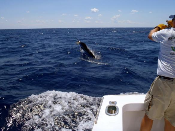 Black bart lures for Hatteras fishing reports