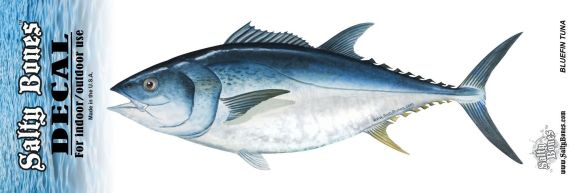 salty bones bluefin tuna