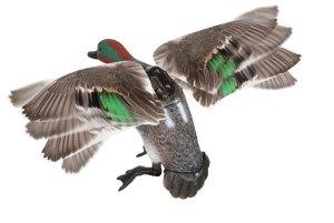 Lucy Duck Rapid Flyer Teal