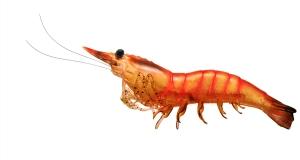 live-target-pre-rigged-soft-plastic-shrimp-pink